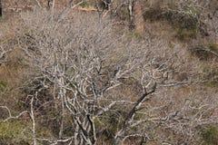 Torka filialer av träd utan bladet royaltyfri fotografi