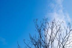 Torka filialer och blå himmel royaltyfri bild