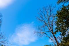 Torka filialer och blå himmel arkivfoto