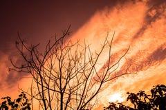 Torka filialer och solnedgången arkivbild