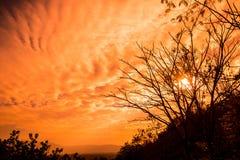 Torka filialer och solnedgången royaltyfri fotografi