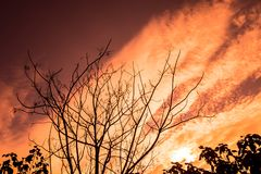Torka filialer och solnedgången fotografering för bildbyråer