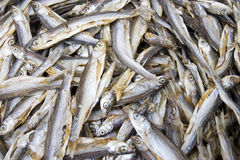 torka fisken Arkivfoton