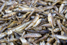 torka fisken Arkivfoto