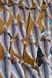 Torka fisken royaltyfria foton