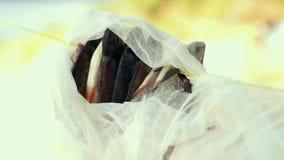 Torka fisken under cheesecloth som hänger på rep i utomhus lager videofilmer