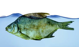 torka fiskvatten Arkivfoton