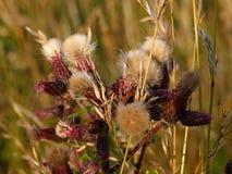 torka gräs Arkivbild