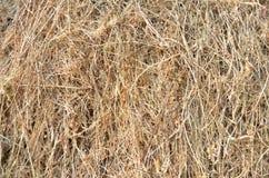 torka gräs Arkivbilder