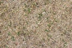 torka gräs Arkivfoton
