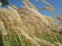torka gräs Royaltyfria Foton