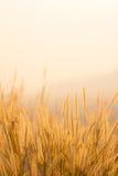 Torka gräsfältet Royaltyfri Bild