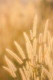 Torka gräsfältet Royaltyfri Foto