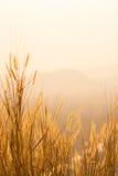 Torka gräsfältet Royaltyfri Fotografi