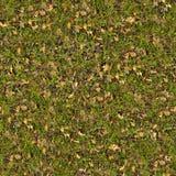 torka gräsgreenleaves seamless textur Royaltyfri Foto
