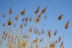 torka grässkyen Arkivbild