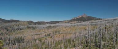 Torka i bergen, nästan slocknad skog royaltyfri foto