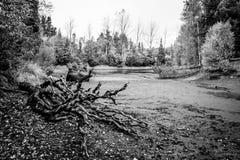 Torka i sjön Fotografering för Bildbyråer