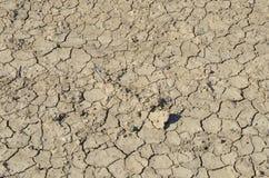 torka jord Arkivbilder