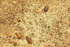 Torka jord med sprickor och stenar royaltyfri bild