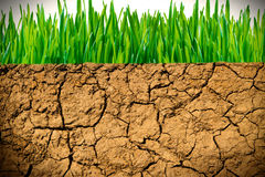 Torka jord och grönt gräs Royaltyfri Fotografi