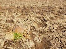 Torka jordning av sprucken lera med tofsen av gräs. Royaltyfri Foto