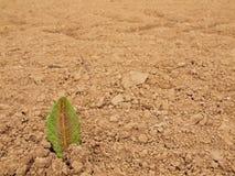 Torka jordning av sprucken lera med tofsen av gräs. Arkivbild