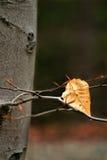 torka leafen arkivfoto