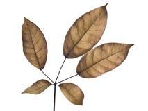 torka leaves arkivfoton