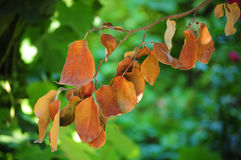 torka leaves royaltyfri bild
