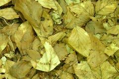 torka leaves arkivbilder