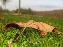 Torka leaves på gräset arkivfoto