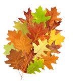 Torka leaves på white Arkivfoto
