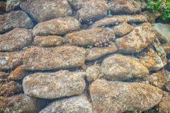 Torka mossig bakgrund för textur för stenväggen Bruna stenväggar av ol Royaltyfria Foton