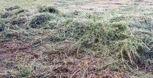 Torka nytt klippt långt gräs från slut Arkivfoto