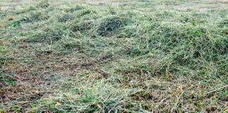 Torka nytt klippt långt gräs från slut Arkivbilder