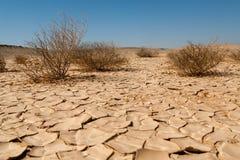 Torka och omvandlande till öken Arkivfoton