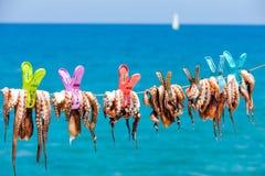 Torka på bläckfisken i solen i sjösidabyn av Plaka royaltyfri bild