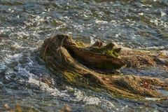 Torka på floden royaltyfria foton