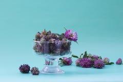 Torka röd växt av släktet Trifolium i en glass vas på frilägegräsplanbakgrund plan Royaltyfria Bilder
