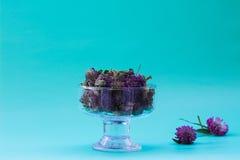 Torka röd växt av släktet Trifolium i en glass vas på frilägegräsplanbakgrund plan Royaltyfri Bild