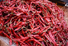 Torka röda chili som används som kryddan Royaltyfri Foto