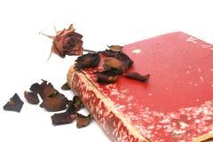Torka rosa Arkivbild