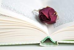 Torka rosa Arkivfoto