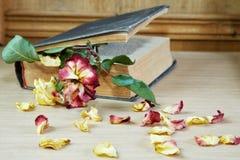 Torka rosa och den gamla boken på en tabell Royaltyfri Foto