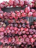 torka runda röda peppar på en vägg arkivfoton