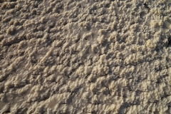 Torka salt Arkivbild