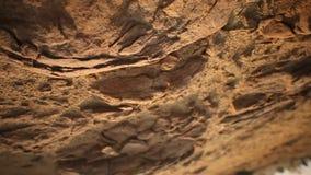 Torka sand i öknen arkivfilmer