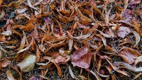 Torka sidor på gräsbakgrund royaltyfri bild