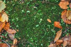 Torka sidor på gräsjordningen royaltyfri fotografi
